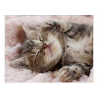 Kitten Sleeping On Towel Postcard at Zazzle
