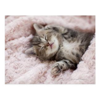 Kitten Sleeping on Towel Post Cards