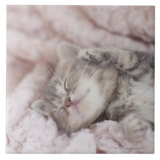Kitten Sleeping on Towel Tile