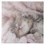 Kitten Sleeping on Towel Tiles