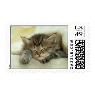 Kitten Sleeping Postage Stamp