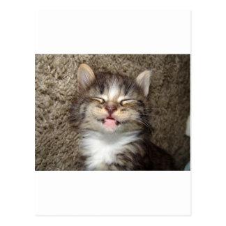 Kitten Smile Postcard