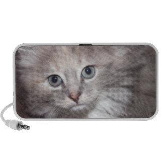 kitten speaker