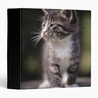 Kitten standing and squinting 3 ring binder