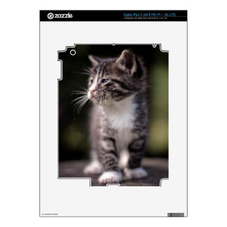 Kitten standing and squinting iPad 3 skins