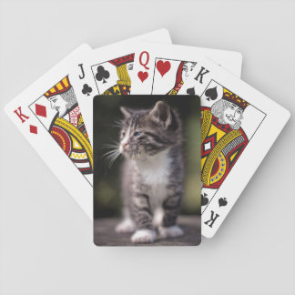 Kitten standing and squinting playing cards