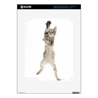 Kitten standing on back paws decals for iPad 3