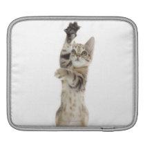 Kitten standing on back paws iPad sleeve