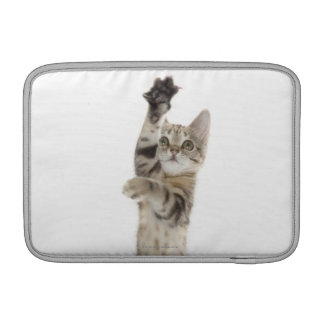 Kitten standing on back paws sleeve for MacBook air