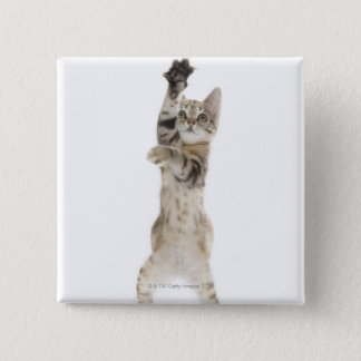 Kitten standing on back paws pinback button