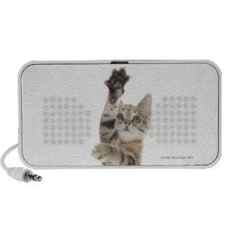 Kitten standing on back paws iPhone speaker