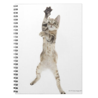 Kitten standing on back paws spiral notebook