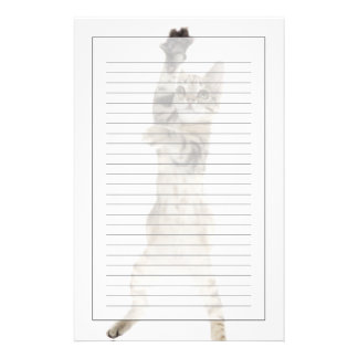 Kitten standing on back paws stationery