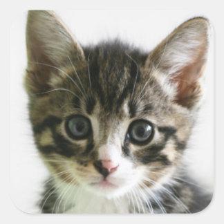 Kitten Stare Square Sticker