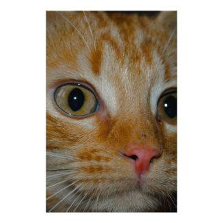 Kitten Personalized Stationery