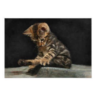 Kitten sweet and funny playing with its tail photo print