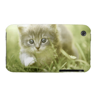 Kitten taking steps in the grass Case-Mate iPhone 3 cases