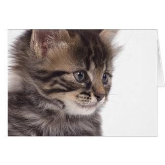 kitten tarjeta de felicitación
