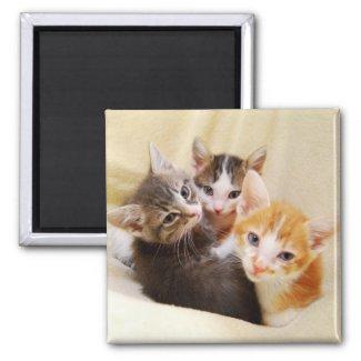 Kitten Trio Magnet magnet