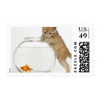 Kitten trying to get at a goldfish stamp