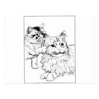 Kitten Tshirts and Gifts 407 Postcards