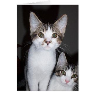 Kitten Valentine Card