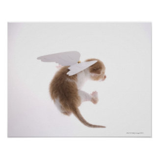 Kitten with angel wings attached to back, rear poster