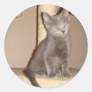 Kitten with Attitude Classic Round Sticker