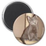 Kitten with Attitude Fridge Magnets