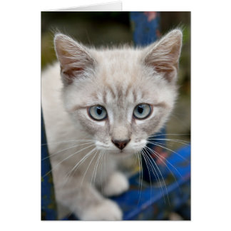 kitten with blue eyes card