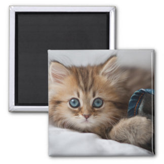 Kitten With Blue Eyes Magnet
