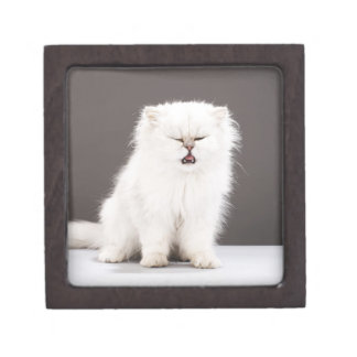 Kitten with Eyes Closed Jewelry Box