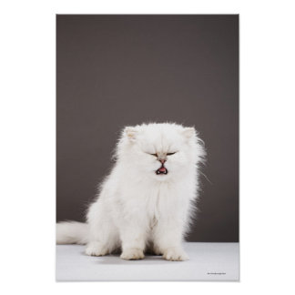 Kitten with Eyes Closed Poster