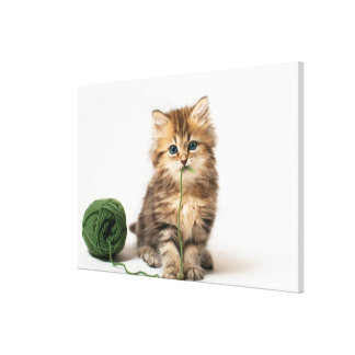 Kitten With Green Yarn Canvas Print