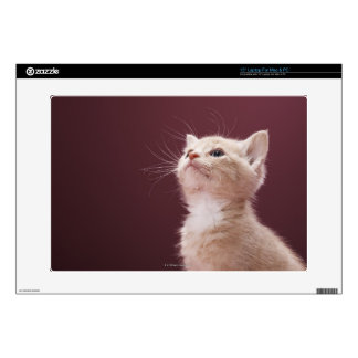 "Kitten with Whiskers Decal For 15"" Laptop"