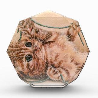 Kitten with Yarn drawing, pet cat art illustration Acrylic Award
