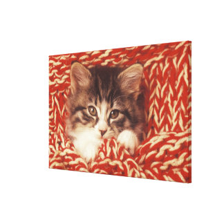 Kitten wrapped in woollen blanket, close-up canvas print