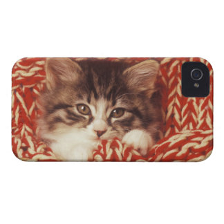 Kitten wrapped in woollen blanket, close-up Case-Mate iPhone 4 case