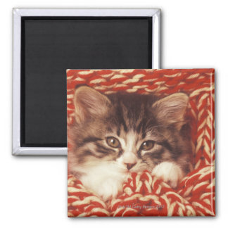 Kitten wrapped in woollen blanket close-up magnets
