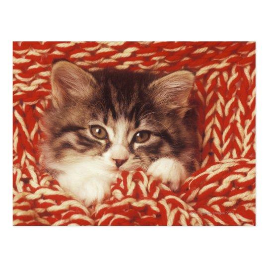 Kitten wrapped in woollen blanket, close-up postcard