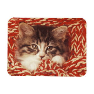 Kitten wrapped in woollen blanket close-up rectangle magnets