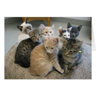 Kittens 048 greeting card