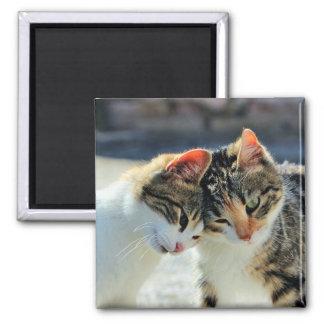 Kittens 2 Inch Square Magnet