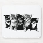 Kittens 3 mouse pad