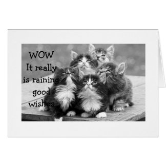 KITTENS ALL AGREE U SHOULD HAVE HAPPY BIRTHDAY CARD