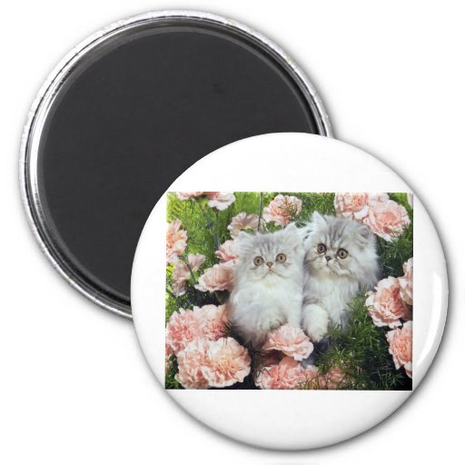 Kittens And Carnations Refrigerator Magnet