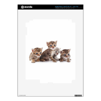 Kittens and more Kittens Decals For iPad 3