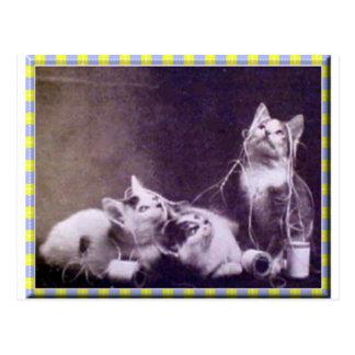 Kittens and Yarn Postcard