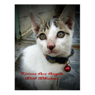 Kittens Are Angels With Whiskers Postcard