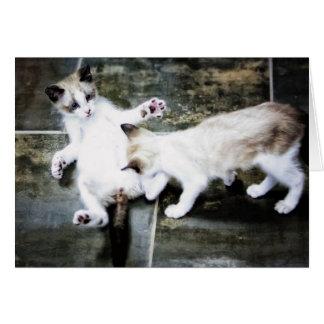 Kittens At Play Greeting Card